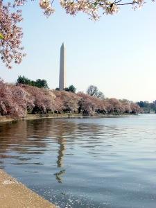 Washington Monument Cherry Blossom Trees